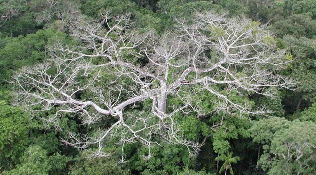 Floresta amazônica e mudanças climáticas